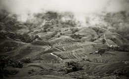 Terrazzi del riso di montagna Immagini Stock Libere da Diritti