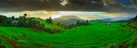 Terrazzi del riso di Papongpieng di divieto di tramonto, Chiang Mai, Fotografia Stock