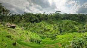 Terrazzi del riso di vista panoramica nelle risaie sulla montagna Fotografia Stock Libera da Diritti