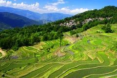 Terrazzi del riso di Yuanyang Fotografie Stock Libere da Diritti