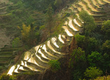 Terrazzi del riso di yuanyang, yunnan, porcellana Immagine Stock