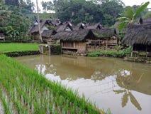 Terrazzi del riso in Java, Indonesia Fotografie Stock Libere da Diritti