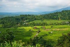 Terrazzi del riso nel Bali Il villaggio è in una valle fra i terrazzi del riso Coltivazione nel Nord del Bali, Indonesi del riso Fotografia Stock