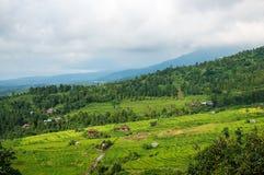 Terrazzi del riso nel Bali Il villaggio è in una valle fra i terrazzi del riso Coltivazione nel Nord del Bali, Indonesi del riso Fotografie Stock
