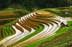 Terrazzi del riso nel Vietnam fotografia stock