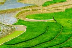 Terrazzi del riso nella piantatura della stagione Immagine Stock Libera da Diritti