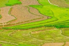 Terrazzi del riso nella piantatura della stagione Fotografia Stock
