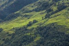Terrazzi del riso, Nepal Fotografia Stock Libera da Diritti