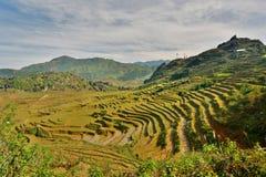 Terrazzi del riso PA del Sa vietnam Immagine Stock Libera da Diritti