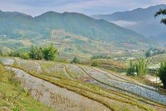 Terrazzi del riso PA del Sa vietnam Fotografia Stock Libera da Diritti