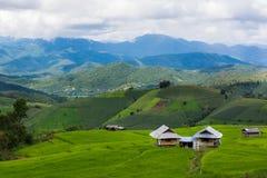Terrazzi del riso, risaia fotografia stock libera da diritti