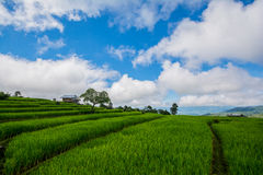 Terrazzi del riso, risaia immagine stock libera da diritti