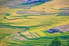 Terrazzi del riso in Sapa, Vietnam Immagini Stock Libere da Diritti