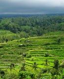 Terrazzi del riso sotto il cielo tempestoso Fotografia Stock Libera da Diritti