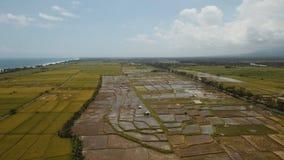 Terrazzi del riso su Bali Fotografia Stock Libera da Diritti