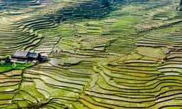 Terrazzi del riso sulla montagna Immagini Stock Libere da Diritti