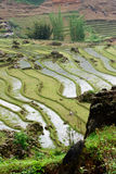Terrazzi del riso in valle di PA del Sa, Vietnam Fotografia Stock Libera da Diritti