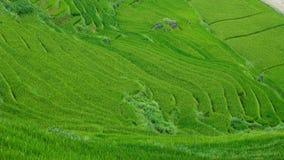 Terrazzi del riso in valle di Sapa, Vietnam Fotografie Stock Libere da Diritti