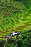 Terrazzi del riso in valle di Sapa, Vietnam Immagine Stock