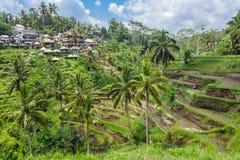 Terrazzi del riso del villaggio di Tegallalang in Bali, Ubud immagine stock libera da diritti
