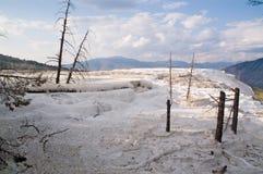 Terrazzi del Yellowstone, Mammoth Hot Springs fotografia stock libera da diritti