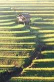 Terrazzi 04 della MU Cang Chai Fotografia Stock