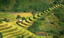 Terrazzi 06 della MU Cang Chai Fotografie Stock Libere da Diritti