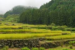 Terrazzi della risaia sulla mattina nebbiosa Fotografia Stock