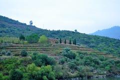 Terrazzi delle vigne e di una casa di campagna fotografia stock libera da diritti