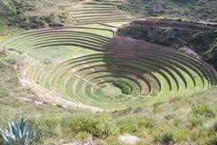 Terrazzi di coltura di Moray fotografia stock libera da diritti
