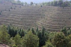 Terrazzi di Dasan della contea di Anxi, porcellana fotografia stock libera da diritti