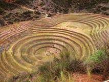 Terrazzi di Moray, Perù del Inca Immagine Stock