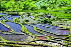 Terrazzi di Yuanyang, Yunnan, Cina del riso Immagini Stock Libere da Diritti
