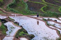 Terrazzi e agricoltore del riso Immagini Stock