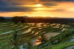 Terrazzi famosi del riso di Jatiluwih su Bali durante l'alba, Indonesia Immagini Stock Libere da Diritti
