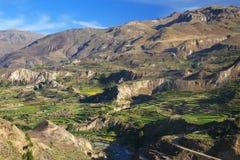 Terrazzi fatti un passo in canyon di Colca nel Perù Immagini Stock