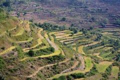 Terrazzi Himalaya Immagini Stock