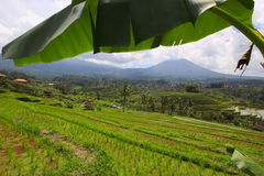 Terrazzi Jatiluwih del riso di balinese Fotografia Stock