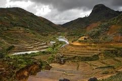 Terrazzi Madagascar del riso Immagine Stock