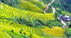 Terrazzi MU Cang Chai del pendio di collina di bellezza immagine stock
