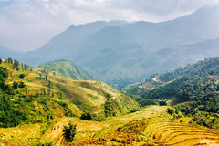 Terrazzi soleggiati del riso agli altopiani del distretto di PA del Sa, Vietnam Fotografia Stock Libera da Diritti