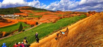 Terrazzi variopinti del riso nella provincia di Yunnan, Cina immagine stock libera da diritti