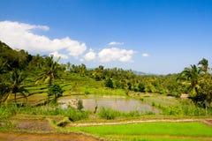 Terrazzi verdi del riso Fotografie Stock