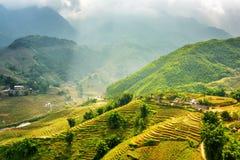 Terrazzi verdi soleggiati del riso agli altopiani di PA del Sa nel Vietnam Fotografia Stock