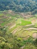 Terrazzi verdi tipici del riso nelle Filippine fotografia stock