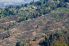 Terrazzi vicino a Pokhara fotografie stock libere da diritti
