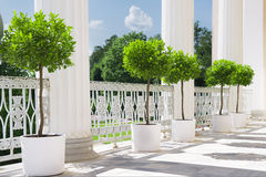 Terrazzo bianco di estate con la pianta in vaso vicino all'inferriata Vista del giardino Fotografie Stock