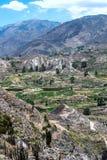 Terrazzo che coltiva nel canyon del fiume di Colca nel Perù del sud Fotografie Stock Libere da Diritti
