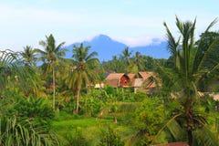 Terrazzo circostante del riso del villaggio, Bali, Indonesia orizzontale Immagine Stock