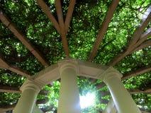 Terrazzo degli alberi Immagini Stock